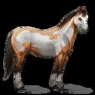 Paint Horse Falbe mit Overo-Scheckung Altes Design