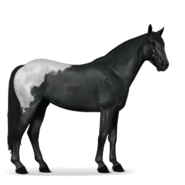Mustang Schabrackenrappe