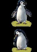 Pinguin Kameraden