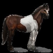 Paint Horse Dunkelbrauner mit Tobiano-Scheckung Altes Design