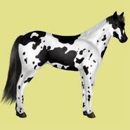 Paint Horse Alte Grafik 6