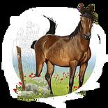 Wildpferde Icon