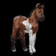 Paint Horse Brauner mit Tobiano-Scheckung Fohlen