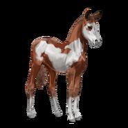 Paint Horse Overo-Fuchsschecke Fohlen