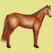 Quarter Horse Altes Design