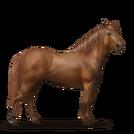 Quarter Pony Fuchs