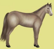 Quarter Horse Alte Grafik 1 Apfelschimmel