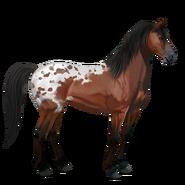 Mustang Rotschecke Alt