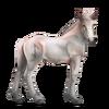 Greyfell 6 Fohlen