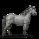Quarter Pony Apfelschimmel