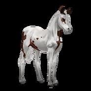 Paint Horse Dunkelbrauner mit Tovero-Scheckung Fohlen
