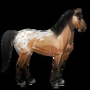 Mustang Falb-Schecke Alt