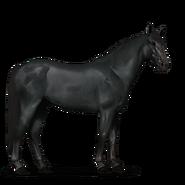 Mustang Rappe