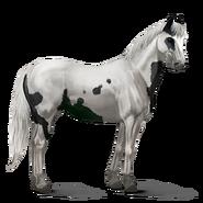 Paint Horse Rappe mit Tovero-Scheckung Altes Design