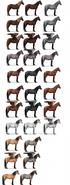 Highland Pony Promo 2