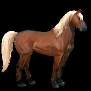 Mustang Fuchs mit heller Mähne Alt