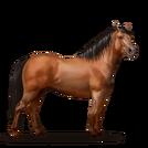 Quarter Pony Rotbrauner