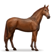 Don-Pferd Fuchs