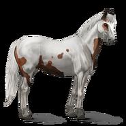 Paint Horse Brauner mit Tovero-Scheckung Altes Design