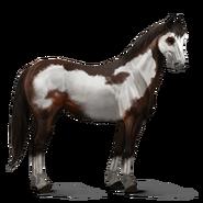 Paint Horse Dunkelbrauner mit Overo-Scheckung Altes Design