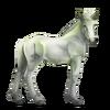 Greyfell 8 Fohlen