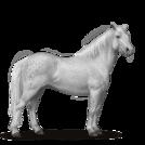 Quarter Pony Forellenschimmel