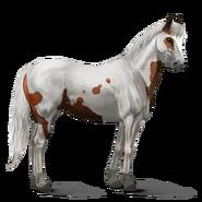 Paint Horse Falbe mit Tobiano-Scheckung Altes Design