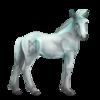 Greyfell 11 Fohlen
