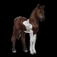 Paint Horse Dunkelbrauner mit Tobiano-Scheckung Fohlen
