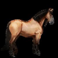 Falbe, Pferd