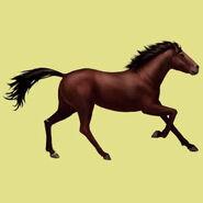Mustang Dunkelbraun