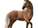 Brumby (Wildpferd)