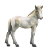 Greyfell 7 Fohlen