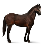 Quarter Horse.Dunkelbrauner.Altes Design