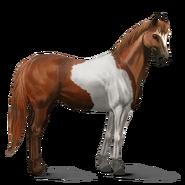 Paint Horse Fuchs mit Tobiano-Scheckung Altes Design
