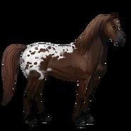 Mustang Dunkelfuchsschecke Alt