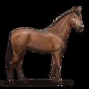 Irisches Sportpferd.Brauner