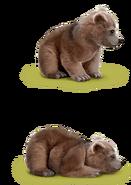 Grizzlybär 2