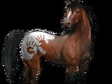Spanischer Mustang
