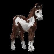 Paint Horse Dunkelfuchs mit Overo-Scheckung Fohlen