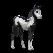 Paint Horse Rappe mit Overo-Scheckung Fohlen