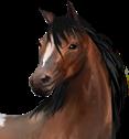 PferdeButton