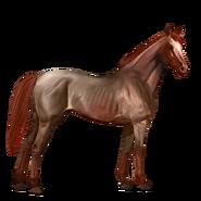Strawberry Roan, Pferd