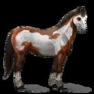 Paint Horse Rotbrauner mit Overo-Scheckung Altes Design