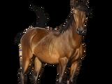 Donaudelta-Pferd
