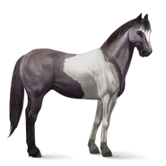 Paint Horse Mausgrauer mit Tobiano-Scheckung Altes Design