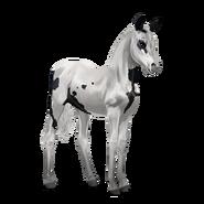 Paint Horse Rappe mit Tovero-Scheckung Fohlen