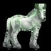 Greyfell 9 Fohlen