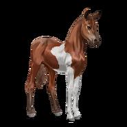 Paint Horse Fuchs mit Tobiano-Scheckung Fohlen