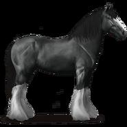 Shire Horse Rappe